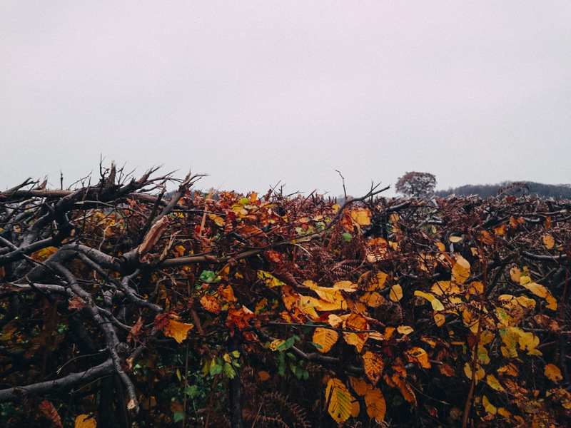 Advent: 1st December – dull, cold and dismal